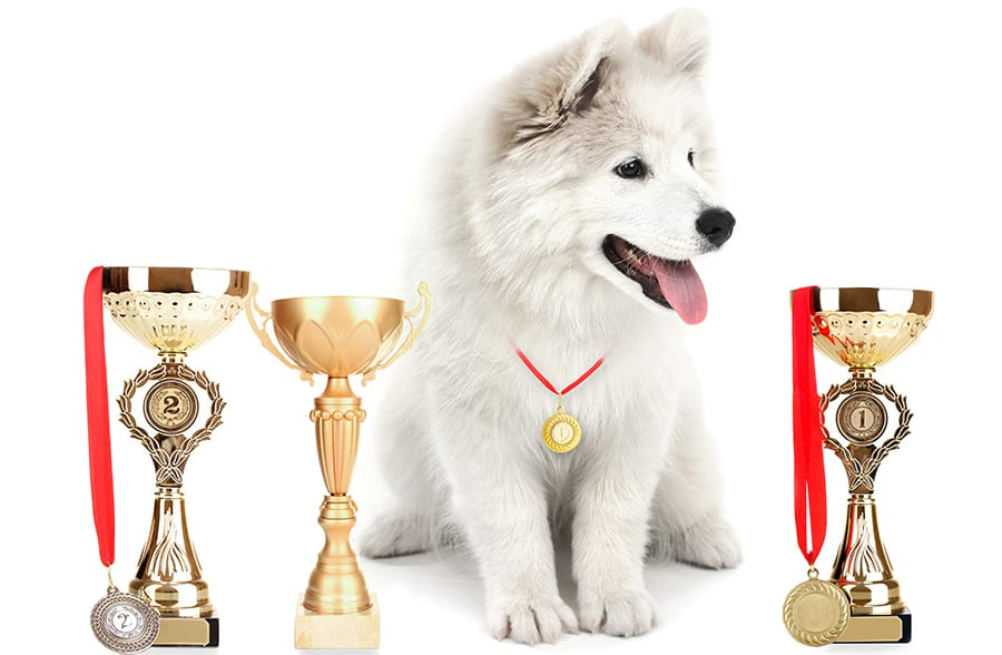 Can You Make Prize Money In Dog Agility If You Win?