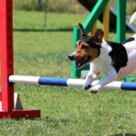 Do Dogs Enjoy Agility Training - Tips, Breeds, And Personality