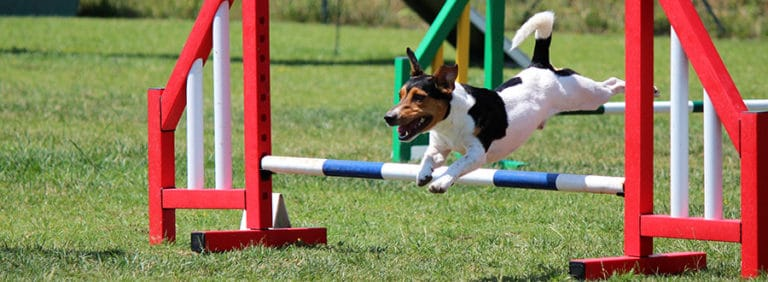 Do dogs enjoy agility training