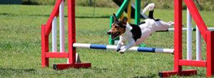 Do dogs enjoy Agility training?