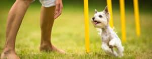 Is Dog Agility Cruel