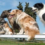 What Dog Breeds Can Do Agility and Which Are The Best?