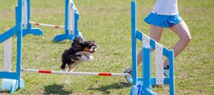 What Is A Dog Agility Course