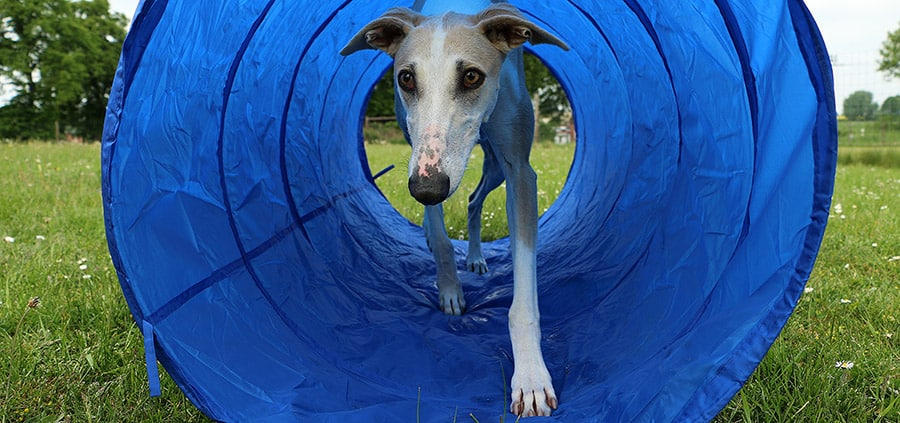 What is a dog Agility tunnel?