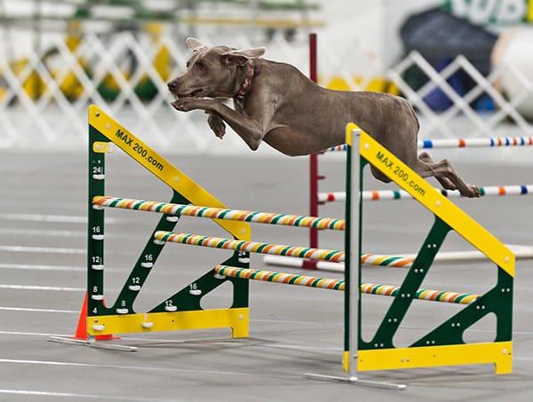 triple bar jump