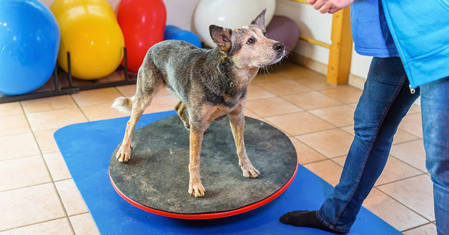 what is a dog agility wobble board