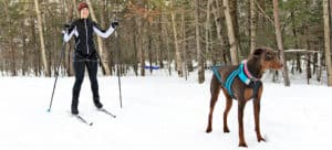 What Is Dog Skijoring?