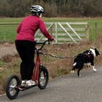 What is Dog Scootering? Training, Equipment, And Best Breeds