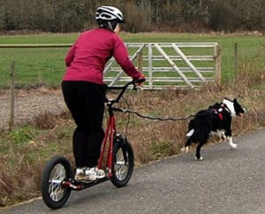 What is dog scootering?
