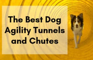 Best Agility Dog Tunnels and Chutes