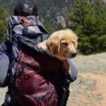 Our 2019 Picks for Best Dog Backpack Carrier for Hiking & Travel