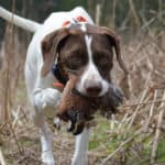 Best Food for Hunting Dogs - High Performance Kibble