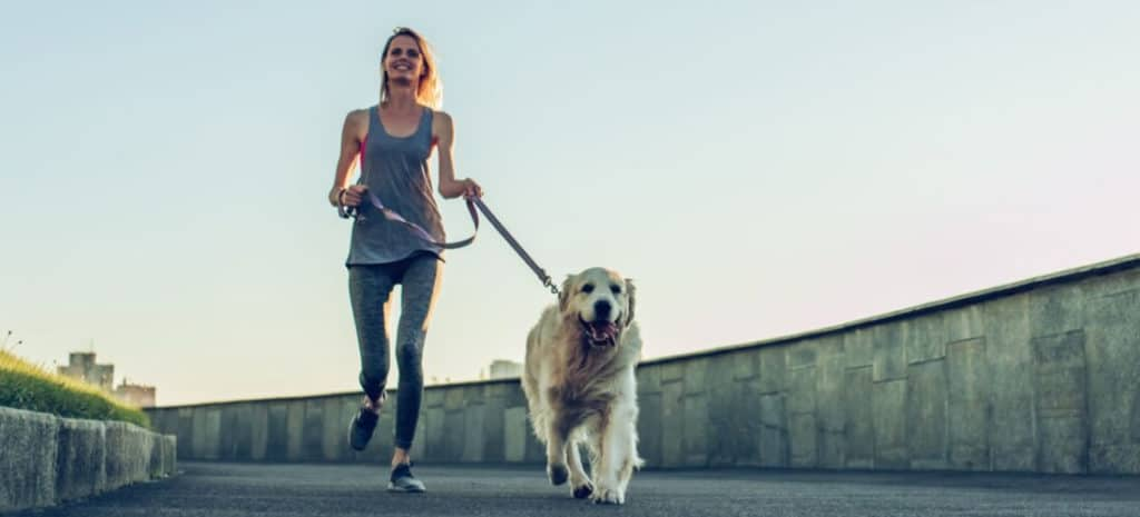 Best Harness for Running With Dogs