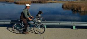 Best Bike Baskets For Dogs
