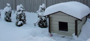 Dog house covered in winter snow
