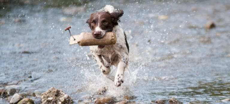Best Water Toys For Dogs