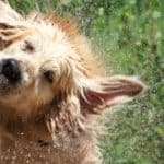 Keep Your Pup Cool With These Splash Pads for Dogs