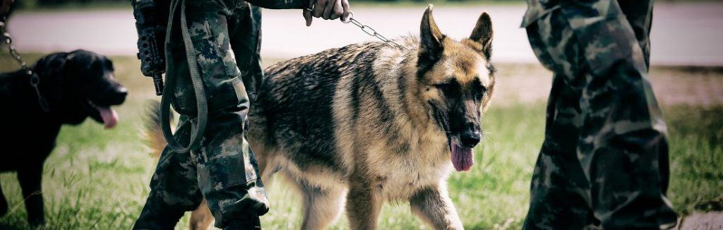 German Shepherd working with armed forces