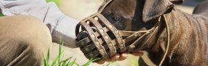 Dog wearing a leather basket muzzle