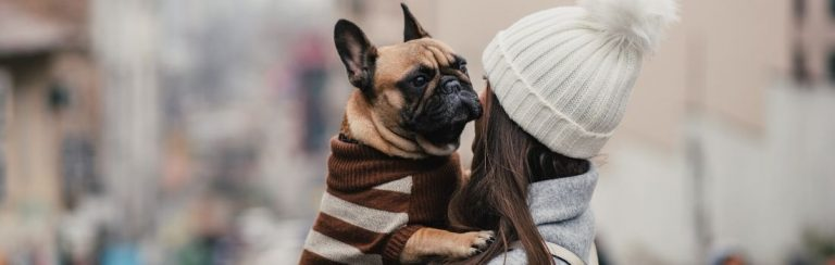 French Bulldog wearing a sweater being held by owner
