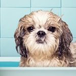 Soothing Oatmeal Baths for Sore Dogs (Recipe Included)