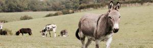 Donkey in a farm field
