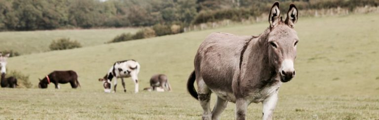 Donkey in a farm field