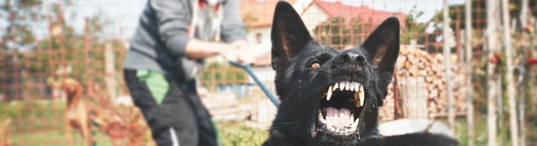 Schutzhund Dog Baring Teeth